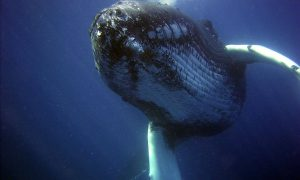 Wale Walschutz