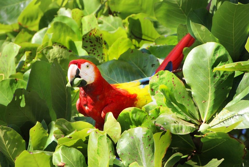 Umwelt, Regenwald und Tier profitieren in Costa Rica von der Renaturalisierung