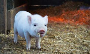 """Der """"Tierschutz"""" der FPÖ ist reine PR-Masche"""