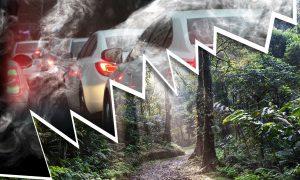 Mehr Autos, weniger Regenwald: die Folgen des Mercosur-Abkommens