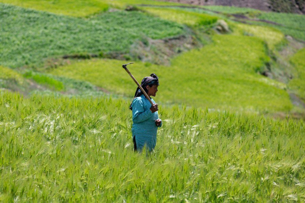 Vandana Shiva Saatgut Nestlé Monsanto