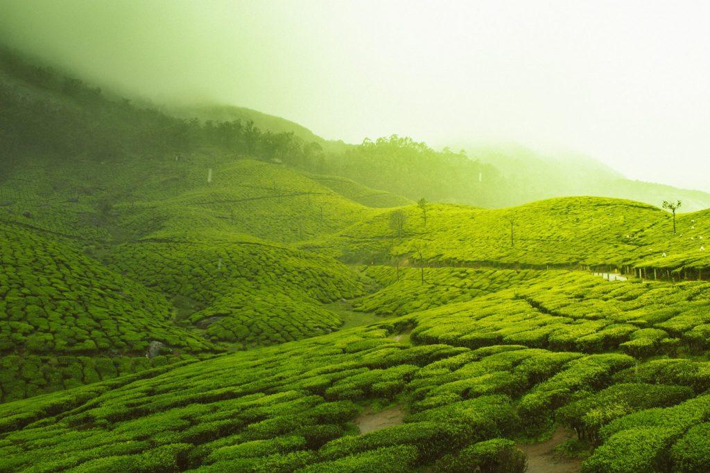 Vandana Shiva Nestlé Monsanto Saatgut