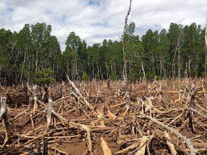 Ein Lieferkettengesetz in Österreich würde die Abholzung von Regenwäldern verhindern.